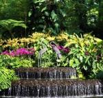 Gradina Botanica din Singapore