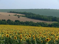 Terenurile agricole: o mină de aur, dar doar pentru cei care au răbdare