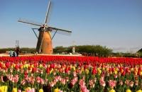 4 Olanda