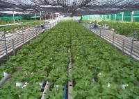 Agricultură fără pământ: noul concept de producţie agricolă a ajuns în România