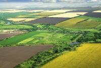 Despre abuz și monopol, pe piața terenurilor agricole. Cine face regulile jocului?
