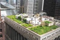 Acoperișurile trebuie să fie acoperite cu plante sau panouri solare, decide guvernul francez