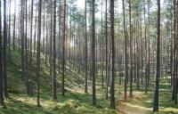 Terenul forestier: o investiție sigură și generatoare de profit imediat