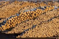 1 Holzindustrie Schweighofer