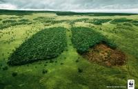 Dispariția pădurilor, la nivel mondial: o problemă acută, fără rezolvări rapide