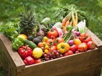 Agricultorii români învață să facă profit din culturile ecologice
