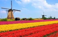 8 Olanda