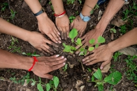 Românii, obligați să planteze copaci pentru fiecare clădire construită: se întâmplă în ...
