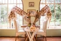 girafe masa